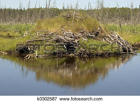 Picture of Beaver Lodge & Pond k0302587.