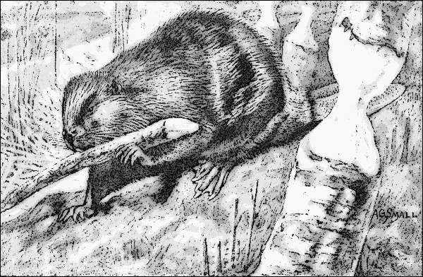 Beaver Lodge Clip Art Download.