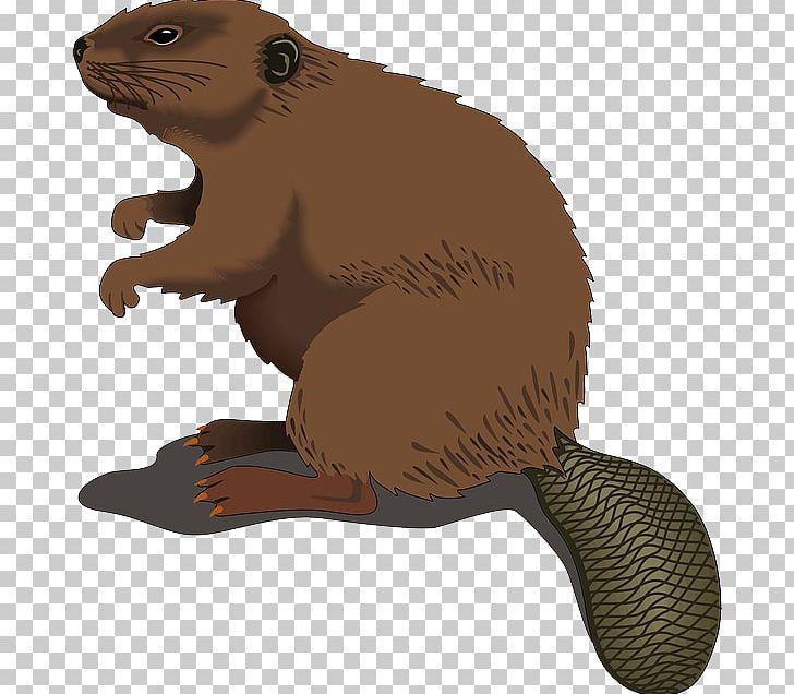 Beaver PNG, Clipart, Beaver, Beaver Dam, Blog, Carnivoran, Cartoon.