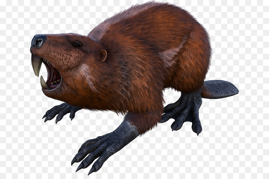 Beaver Cartoon png download.