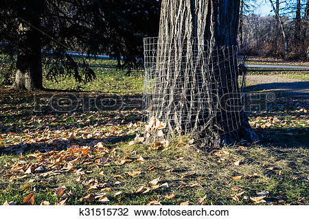 Stock Photo of beaver protection metal net guard k31515732.