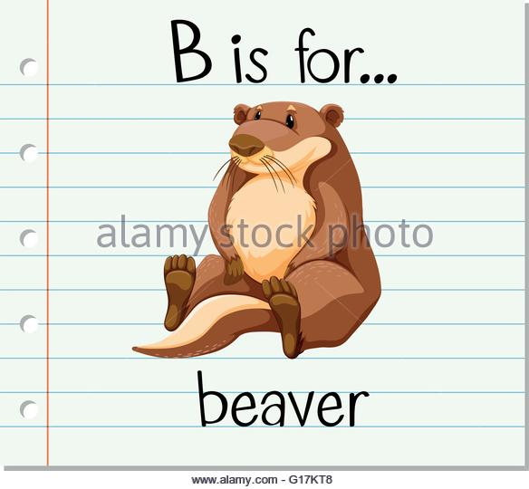 Beaver Illustration Graphic Stock Photos & Beaver Illustration.