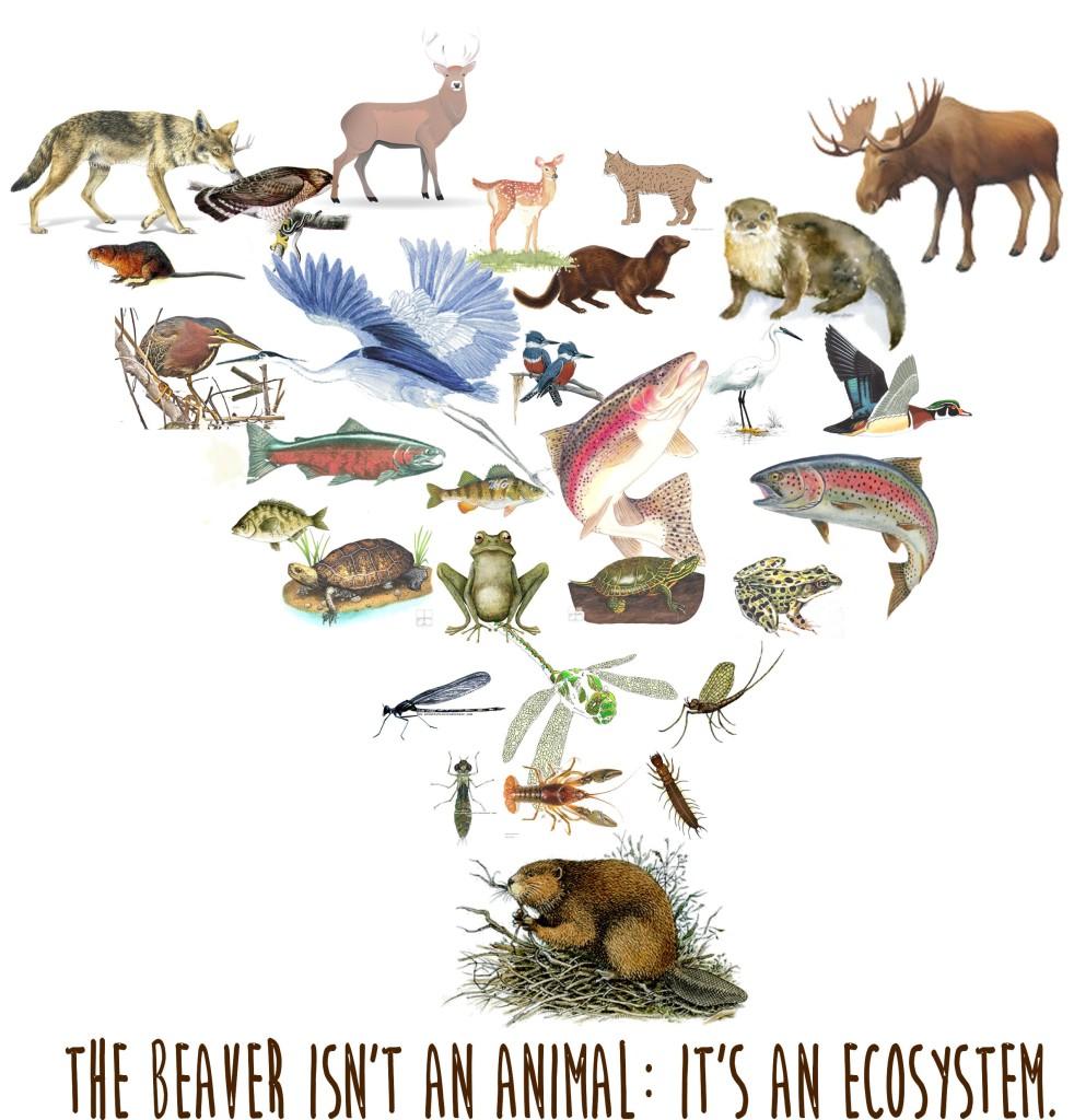 MartinezBeavers.org » Friends of Martinez Beavers.