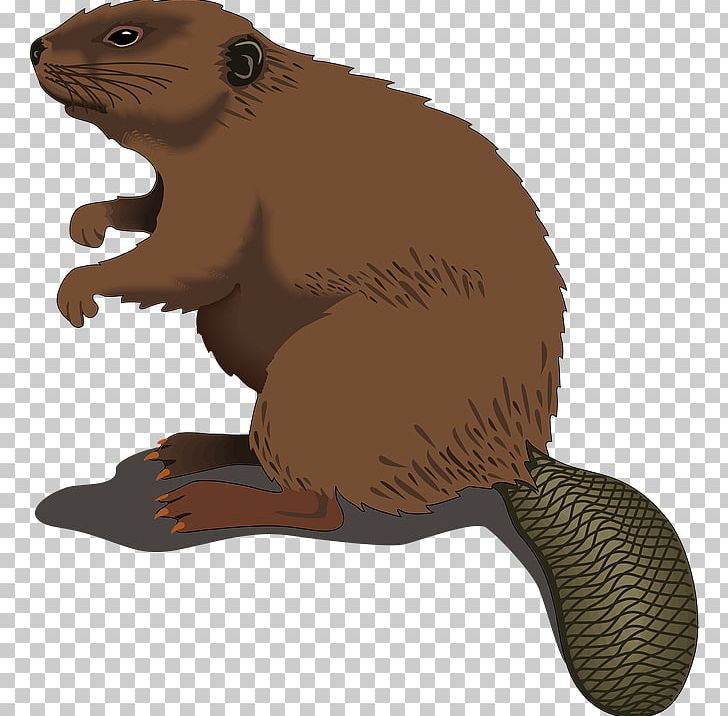 North American Beaver Silhouette PNG, Clipart, Beaver, Beaver Dam.
