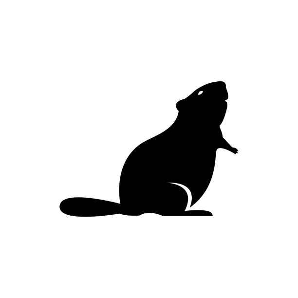 Best A Beaver Silhouettes Illustrations, Royalty.