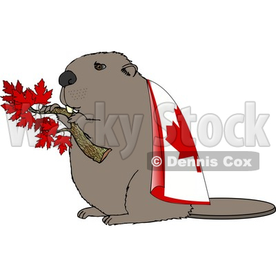 Beaver Holding Maple Tree Branch and Wearing Canada Flag Clipart.