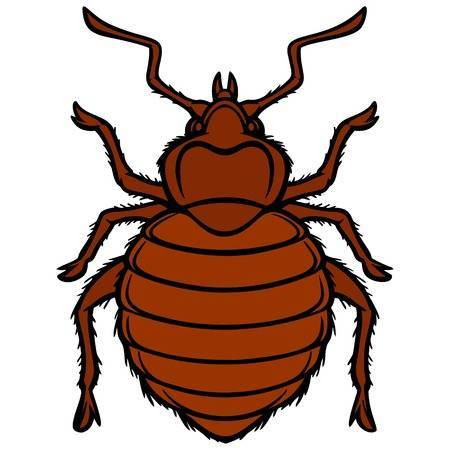 Bed bug clipart 1 » Clipart Portal.