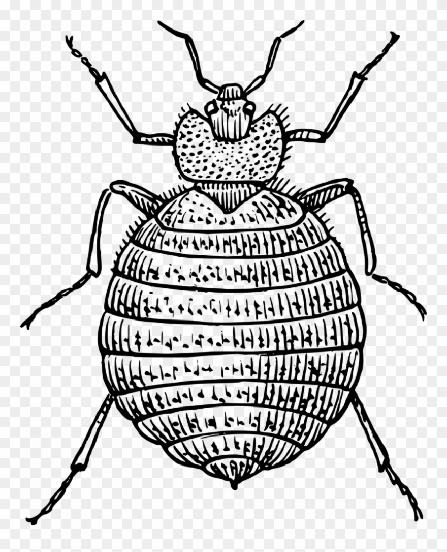 Drawn Bugs Bed Bug.