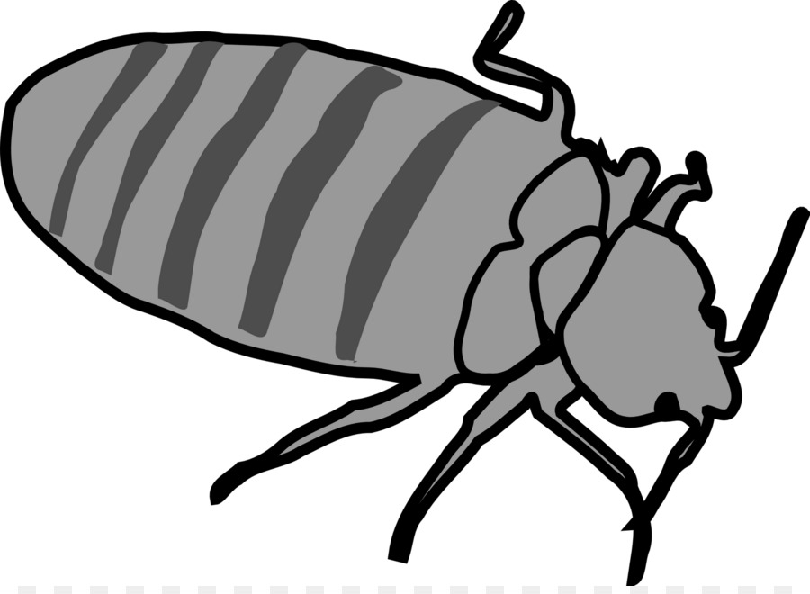 Bed Bug Fly png download.