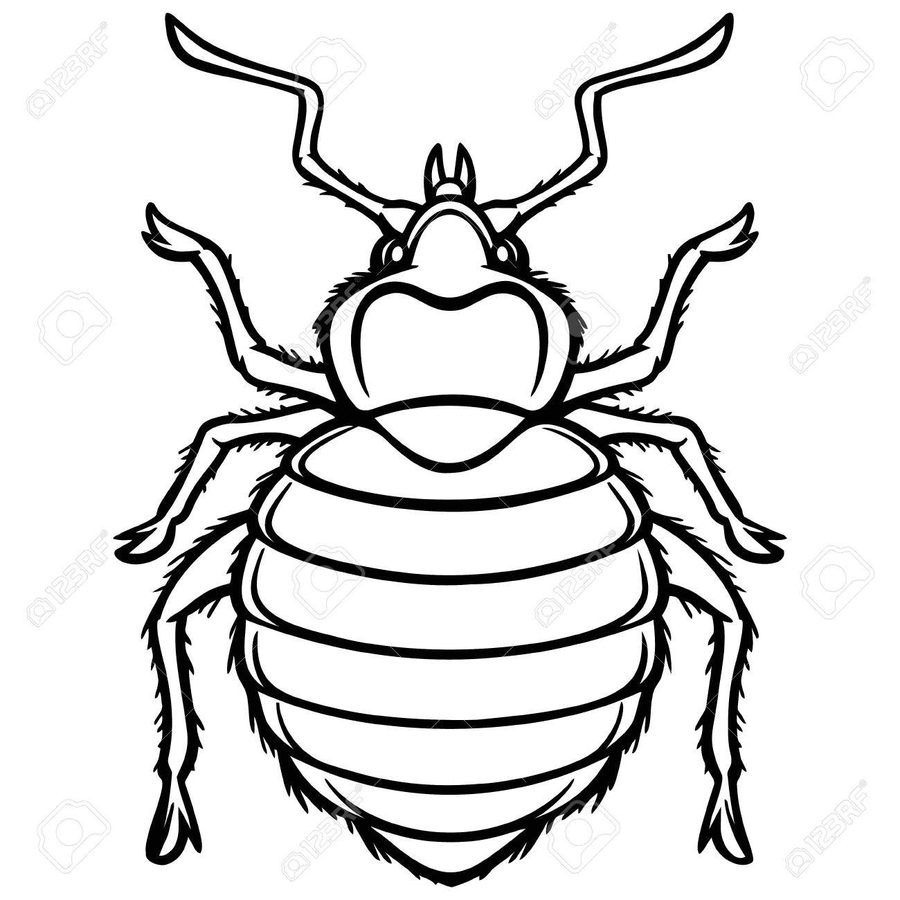 Bed Bug Graphic Illustration.