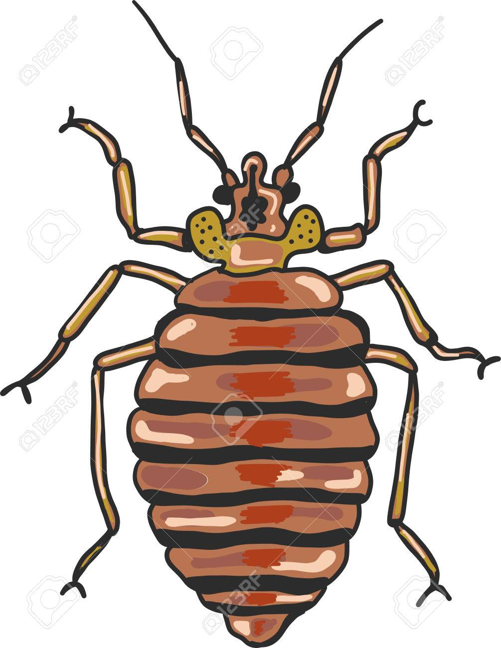 Bed bug vector clip.
