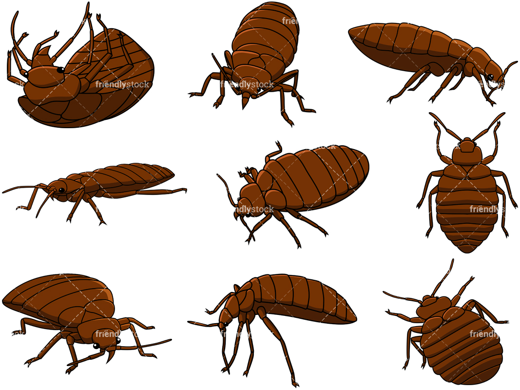 Bed Bugs Collection.