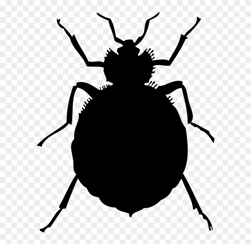 Bed Bugs Clipart.