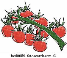 Cherry tomato Illustrations and Clipart. 289 cherry tomato royalty.