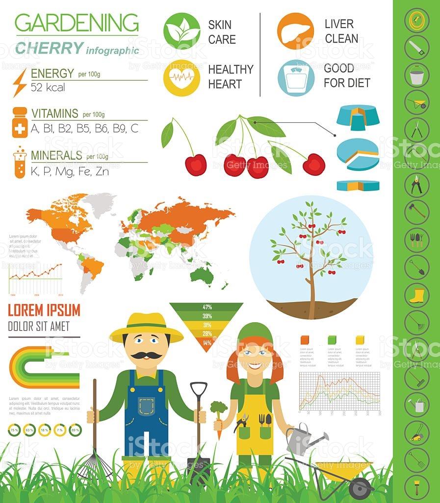 Gardening Work Farming Infographic Cherry Graphic Template stock.