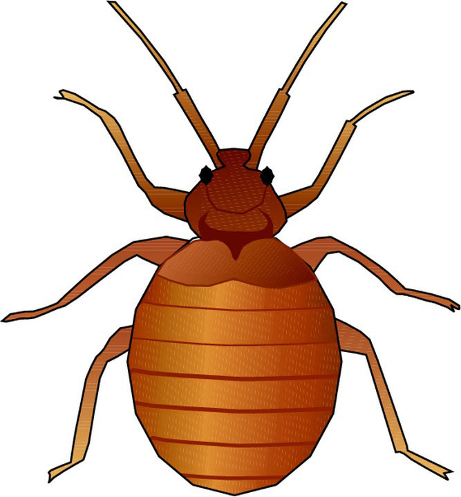 Bed bug clip art.