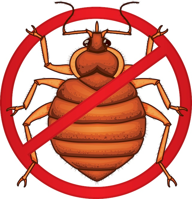 Bed Bug Photos, Clipart Images & Pics: What do Bed Bugs Look Like?.