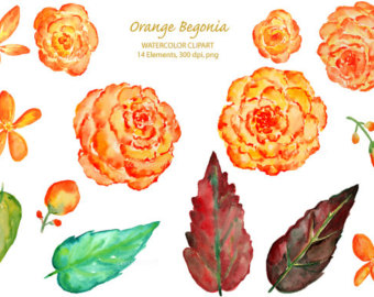 begonia flower party invitations.