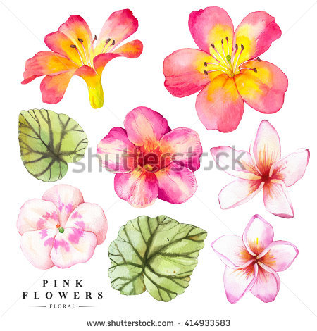 Begonia Stock Photos, Royalty.