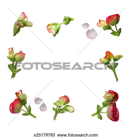 Stock Photo of Begonia Border x25179793.