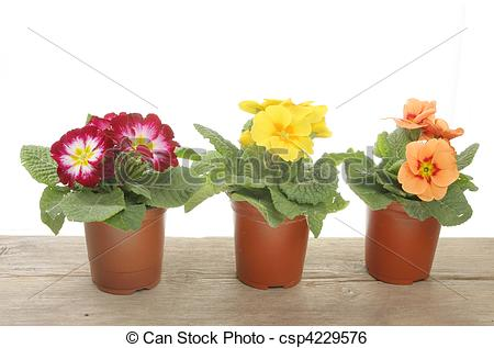 Bedding plant clipart #14