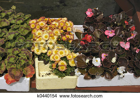 Stock Photo of young bedding plants k0440154.