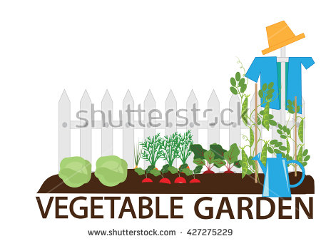 Growing Vegetables Stock Images, Royalty.