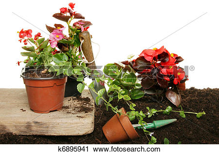 Stock Photography of Summer bedding plants k6895941.