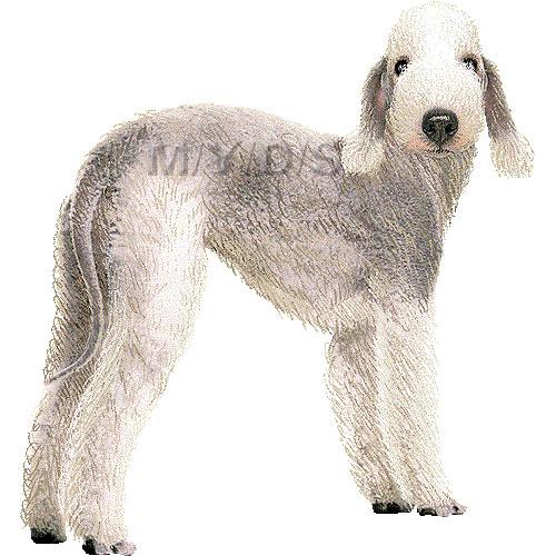 Bedlington Terrier clipart graphics (Free clip art.