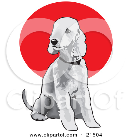 Clipart Illustration of a Seated Gray Bedlington Terrier Dog.