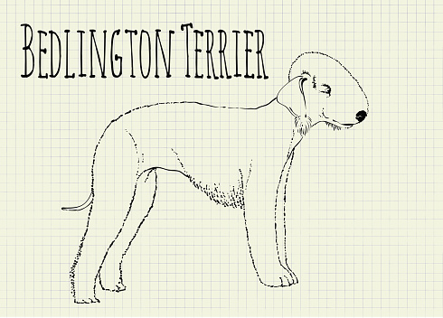 Bedlington Terrier Clip Art, Vector Images & Illustrations.