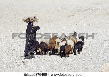 "Stock Photography of ""Bedouin woman carrying sugarcane on her head."