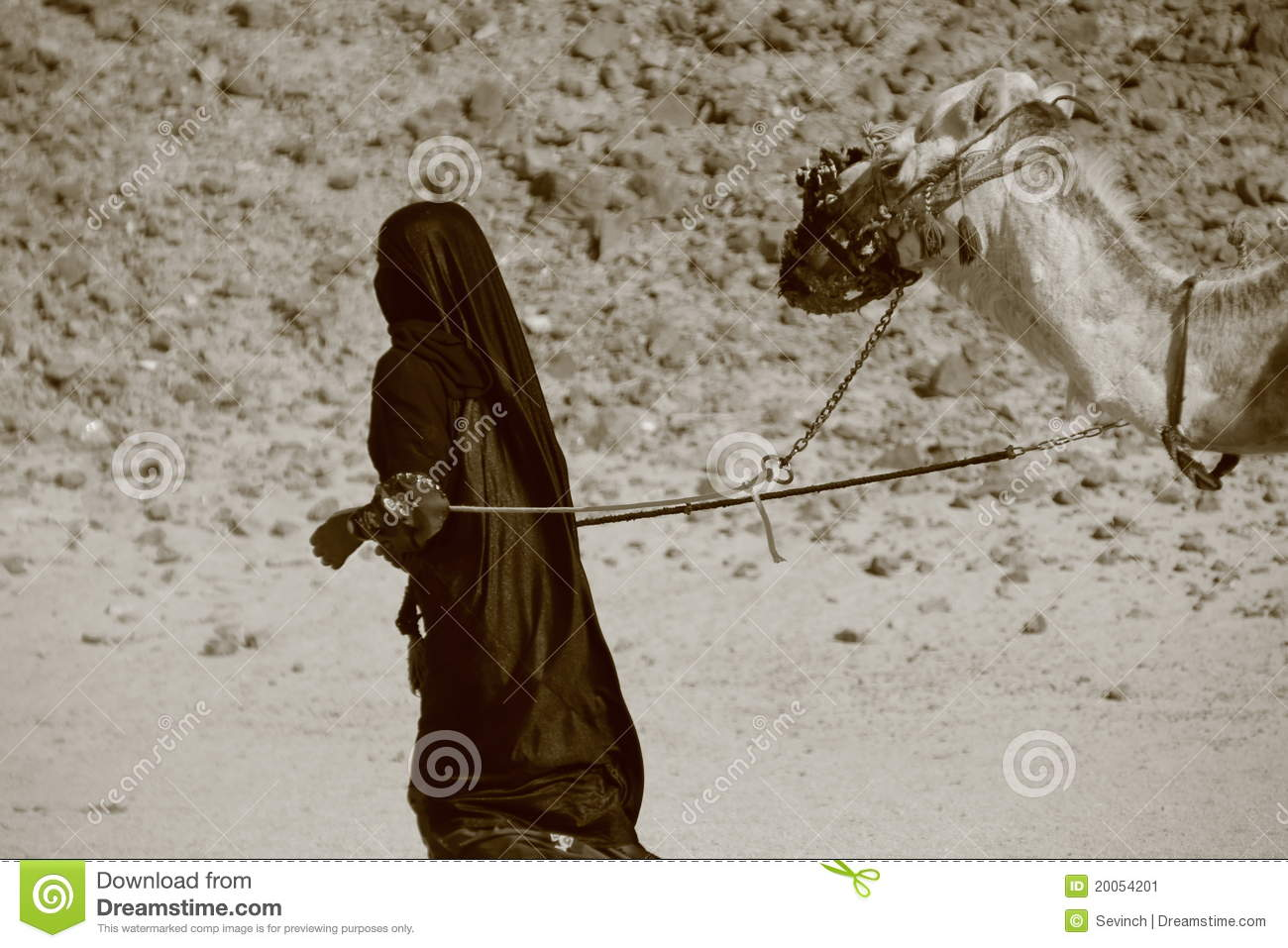Bedouin Woman With Camel Stock Image.
