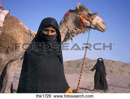 Stock Photograph of Bedouin women with camels thk1729.