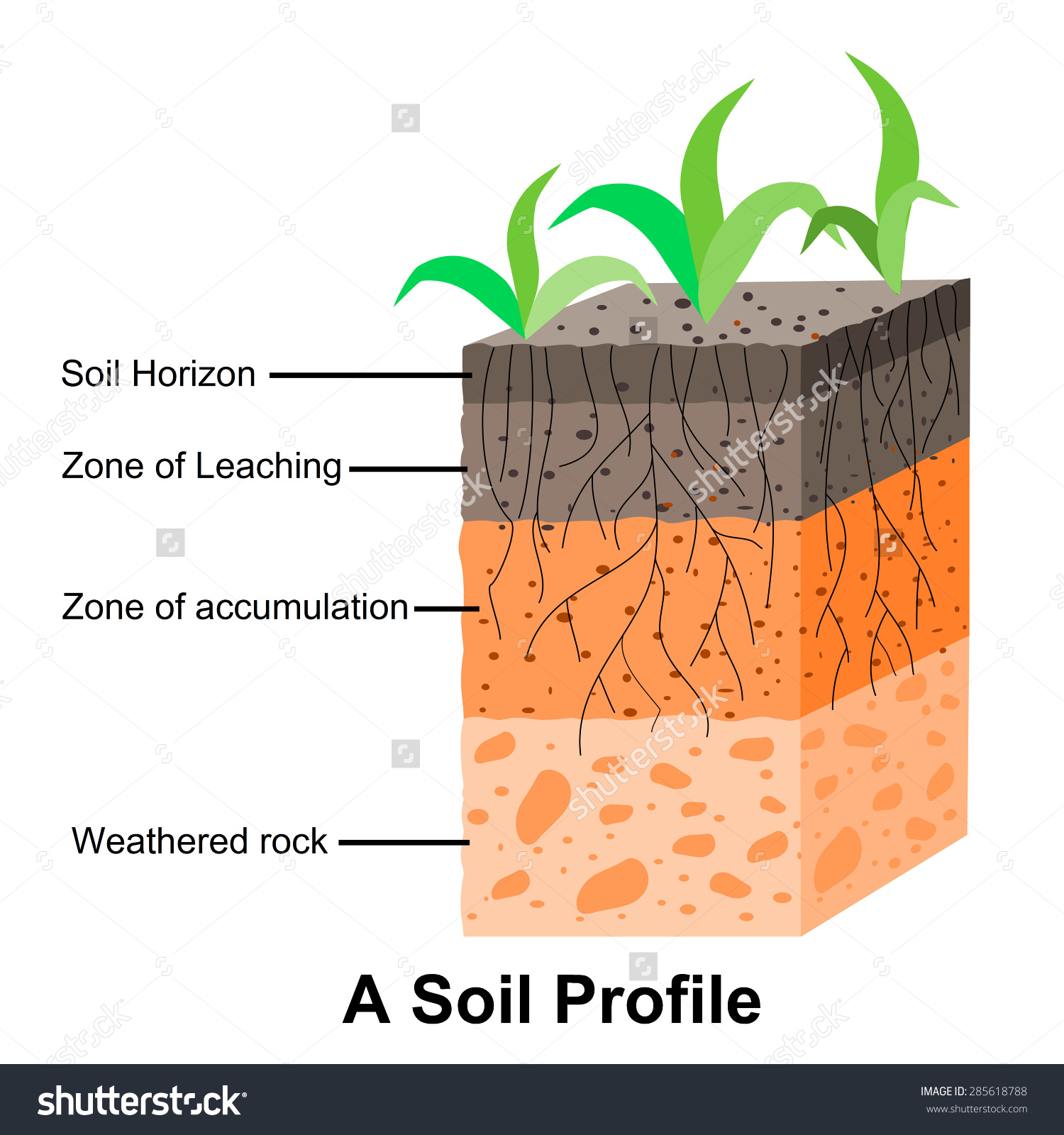 Soil Formation Soil Horizons Stock Vector 285618788.