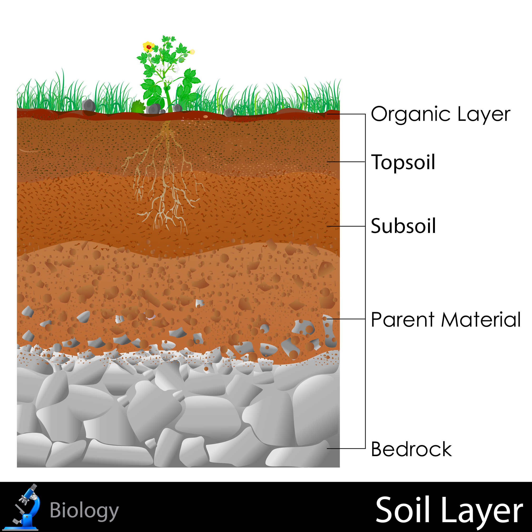 Soil layers clipart.