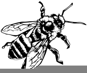 Honey Bee Clipart Black And White.