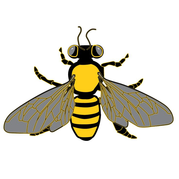 1000+ images about Bee and Honeycomb Graphics, Borders, Frames.