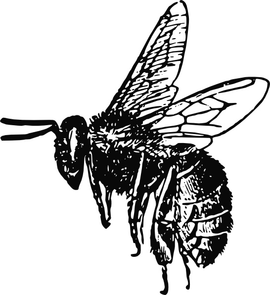Bee clip art Free vector in Open office drawing svg ( .svg ) vector.