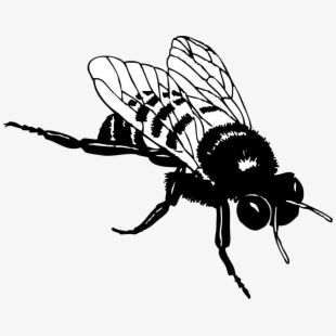 Net » Clip Art » Bumble Bee Black White Line Art Svg.