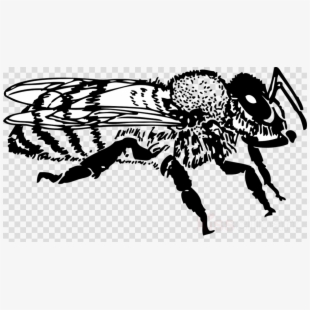 Free Honey Bee Clipart Black And White Cliparts, Silhouettes.