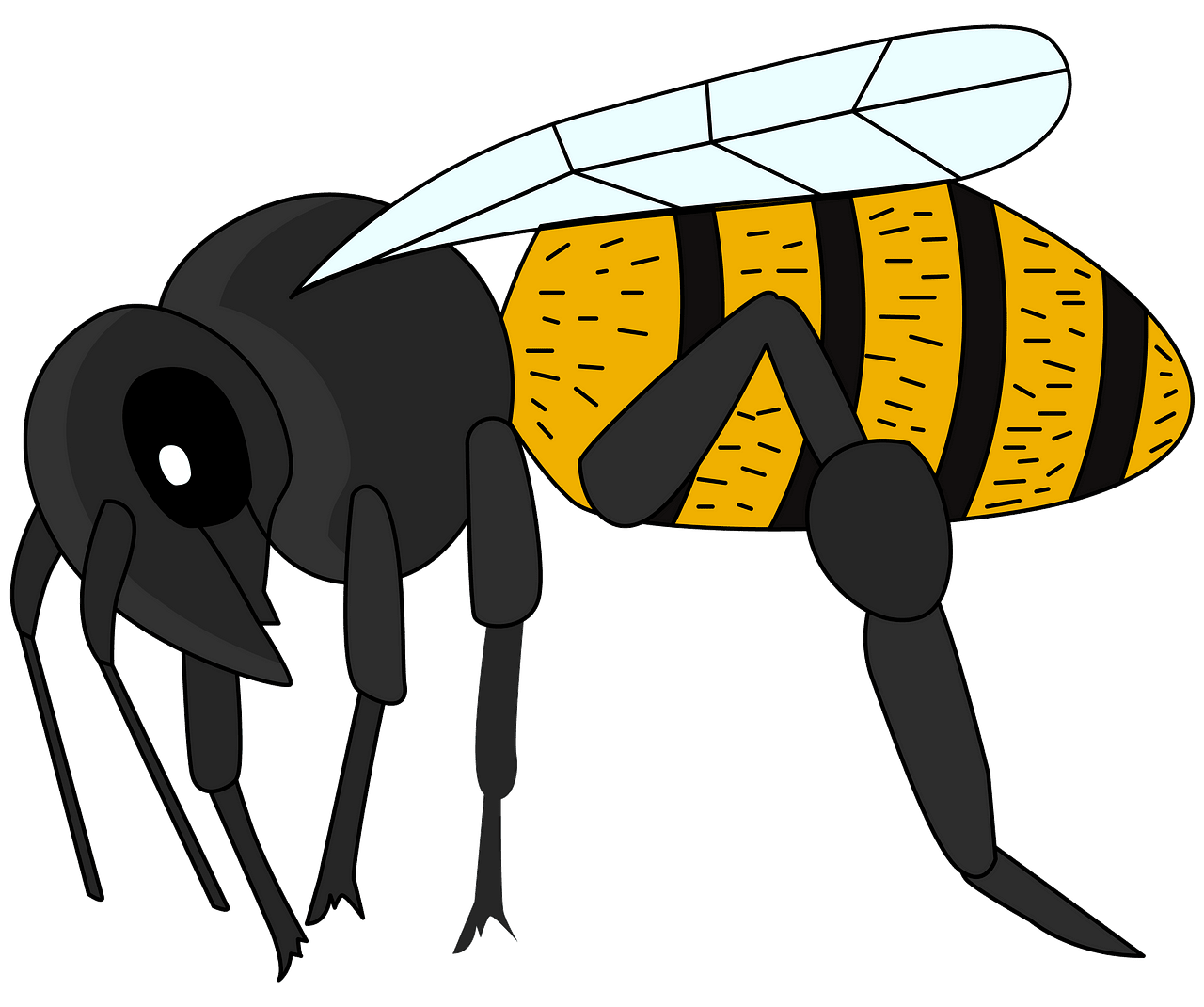 Bee clipart. Free download..