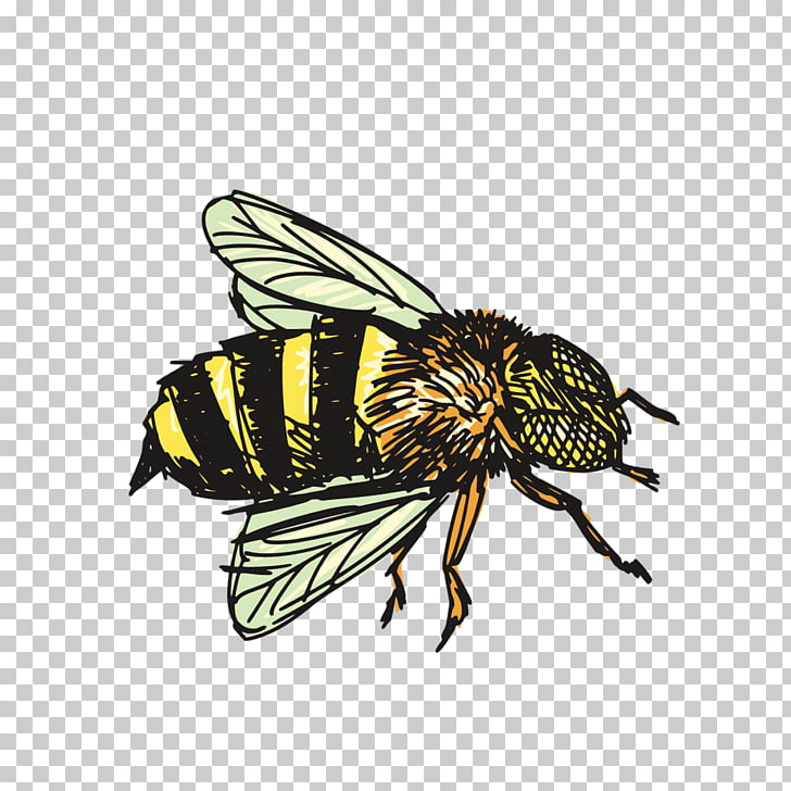 Insect Bee Drawing , bee, yellow and black bumble bee.