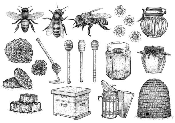 Best Bee Drawings Illustrations, Royalty.