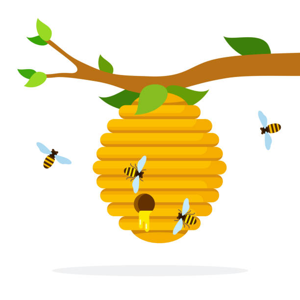 Best Beehive Illustrations, Royalty.