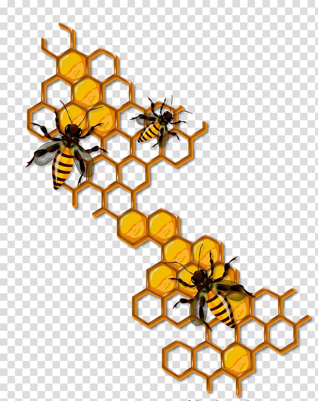 Bee Honeycomb Insect , bee transparent background PNG clipart.
