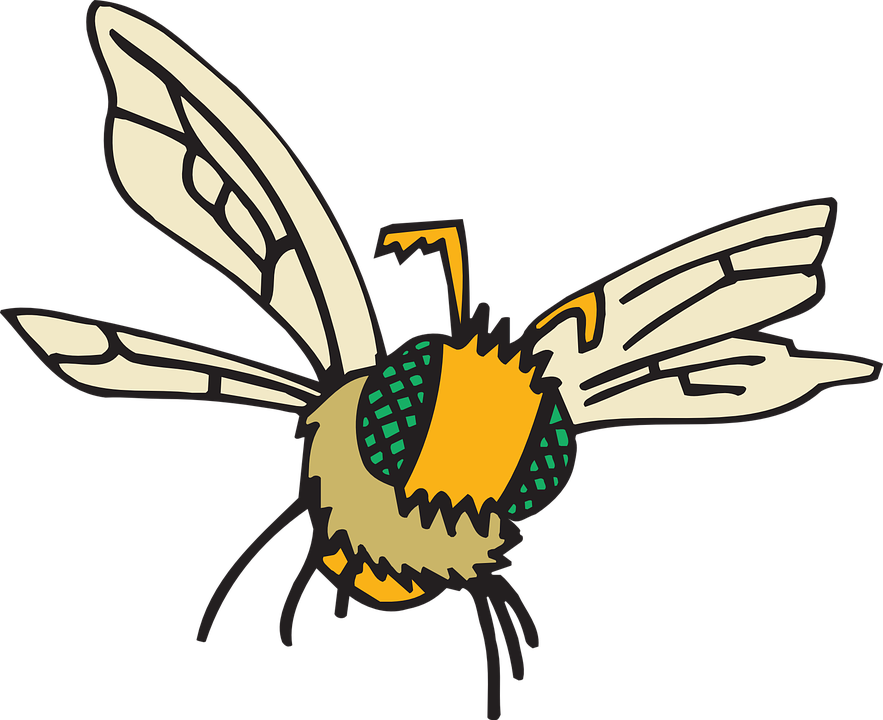 Free vector graphic: Eyes, Bee, Flying, Insect, Compound.