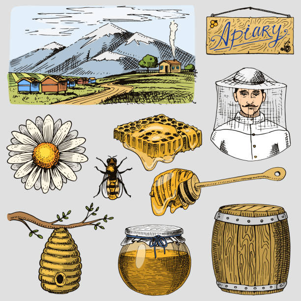 Best Beekeeper Illustrations, Royalty.