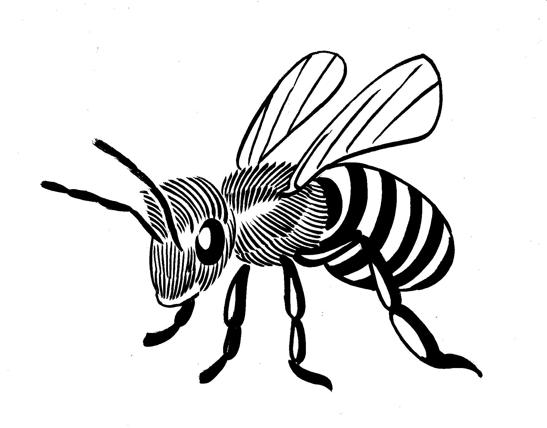 Bee Line Drawing.