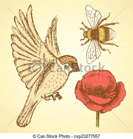 Clipart Vector of Sketch poppy, bee and sparrow in vintage style.